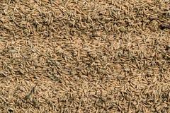 Fondo del arroz foto de archivo