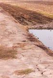 Fondo del arroz moreno en Tailandia. fotos de archivo