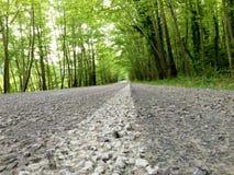 Fondo del asfalto con el árbol Foto de archivo