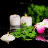 Fondo del balneario de la flor del plumeria, espárrago verde de la rama, helecho Foto de archivo libre de regalías