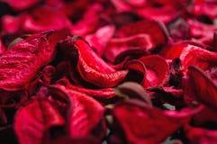 Fondo del balneario de los pétalos secados de rosas rojas Fotos de archivo
