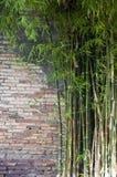 Fondo del bambú del ladrillo Foto de archivo libre de regalías