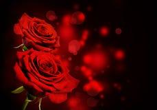 Fondo del biglietto di S. Valentino delle rose rosse Fotografie Stock Libere da Diritti