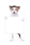 Fondo del blanco de Kitten With Surprise Expression On del calicó del bebé Fotografía de archivo