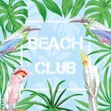 Fondo del blu degli uccelli e delle foglie del club della spiaggia di slogan Immagini Stock