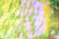 Fondo del bokeh de la flor Imagen de archivo