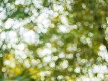 Fondo del bokeh de la luz natural Fotografía de archivo