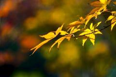 Fondo del bokeh di autunno confinato con le foglie Fotografie Stock