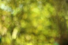 Fondo del bokeh verde Imagenes de archivo