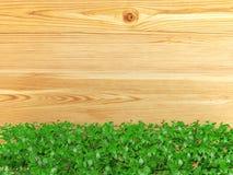 Fondo del bordo di legno coperto di pianta ornamentale del cespuglio con lo spazio della copia Fotografia Stock Libera da Diritti