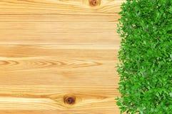 Fondo del bordo di legno coperto di pianta ornamentale del cespuglio con lo spazio della copia Immagini Stock