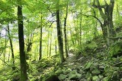 Fondo del bosque imagen de archivo