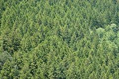 Fondo del bosque Imágenes de archivo libres de regalías
