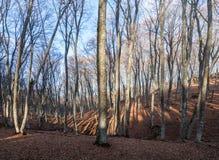 Fondo del bosque Imagen de archivo libre de regalías