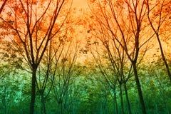 Fondo del bosque Fotos de archivo libres de regalías
