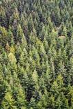 Fondo del bosque Imagenes de archivo