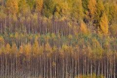 Fondo del bosque del otoño Fotos de archivo libres de regalías