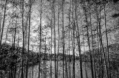 Fondo del bosque en Finlandia Imágenes de archivo libres de regalías