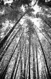 Bosque Nevado Foto de archivo