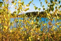 Fondo del bosque y del lago del otoño Fotos de archivo
