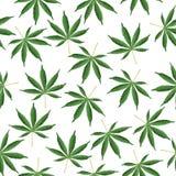 Fondo del cáñamo El cáñamo de la mala hierba de Ganja de la marijuana hojea modelo inconsútil del vector stock de ilustración