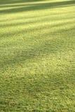 Fondo del césped de la hierba con las sombras de la tarde Fotografía de archivo libre de regalías