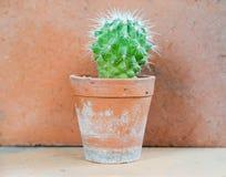 Fondo del cactus y adornado Imagenes de archivo