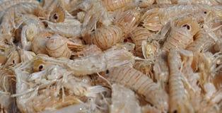 Fondo del camarón fresco Fotografía de archivo libre de regalías