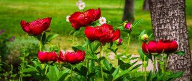Fondo del campo de flores Imágenes de archivo libres de regalías