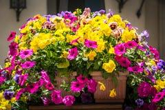 Fondo del campo de flores Imagen de archivo libre de regalías