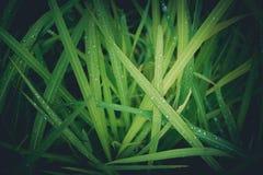 Fondo del campo de hierba Imágenes de archivo libres de regalías