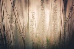 Fondo del campo de hierba Foto de archivo libre de regalías