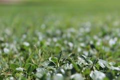 Fondo del campo de hierba verde Imagen de archivo libre de regalías