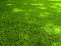 Fondo del campo de hierba verde, textura, modelo foto de archivo