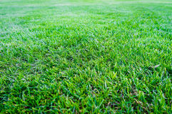 Fondo del campo de hierba verde, textura, modelo Imagen de archivo