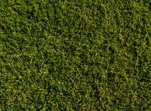 Fondo del campo de hierba verde, textura, modelo Comida, corte fotos de archivo libres de regalías