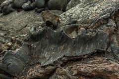 Fondo del campo de lava congelado en el volcán de Tolbachik, después de la erupción en 2012, grupo de Klyuchevskaya de volcanes Fotografía de archivo libre de regalías