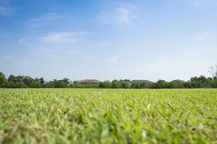 Fondo del campo del Greensward Fotografie Stock