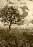 Fondo del campo del Grunge Imagen de archivo libre de regalías