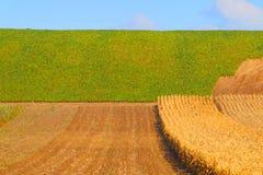 Fondo del campo dell'agricoltore Paesaggio rurale Immagini Stock