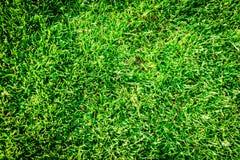 Fondo del campo di erba verde, struttura, modello Fotografia Stock Libera da Diritti