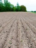 Fondo del campo recentemente arato pronto per i nuovi raccolti Fotografia Stock