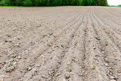 Fondo del campo recentemente arato pronto per i nuovi raccolti Immagine Stock Libera da Diritti