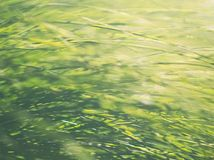 Fondo del Carex del jardín fotos de archivo