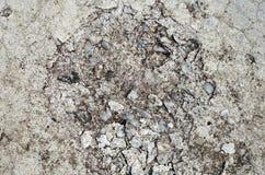 Fondo del cemento Foto de archivo