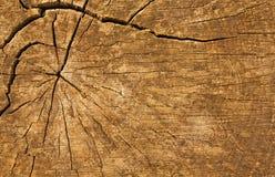 Fondo del ceppo del legname Fotografie Stock
