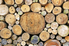 Fondo del ceppo di albero Immagine Stock