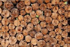 Fondo del ceppo di albero Immagine Stock Libera da Diritti