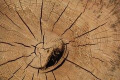 Fondo del ceppo in natura Fotografia Stock Libera da Diritti