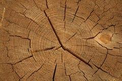 Fondo del ceppo in natura Fotografie Stock